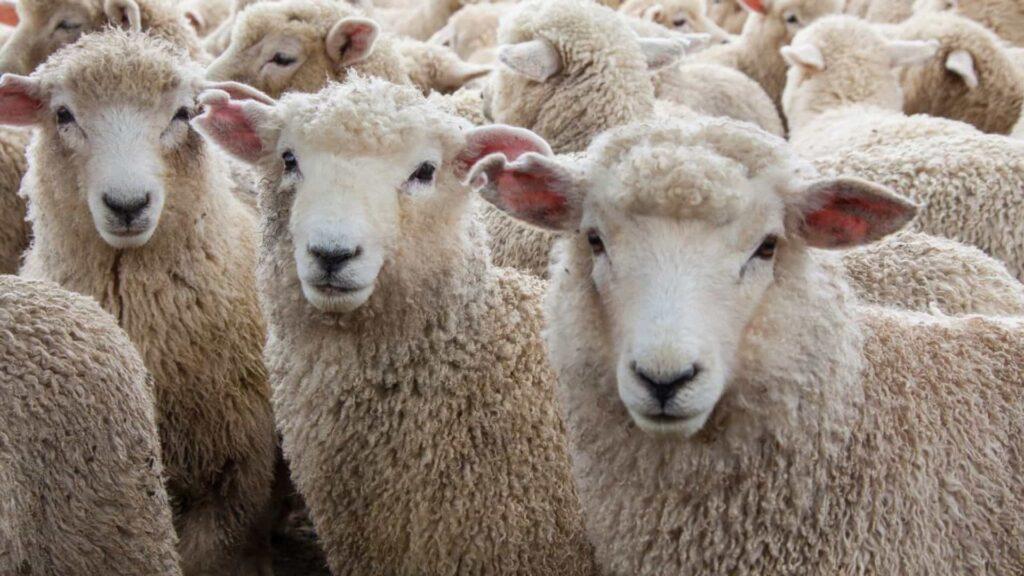 Peniche: 200 Animais morreram envenenados. Situação está a ser investigada